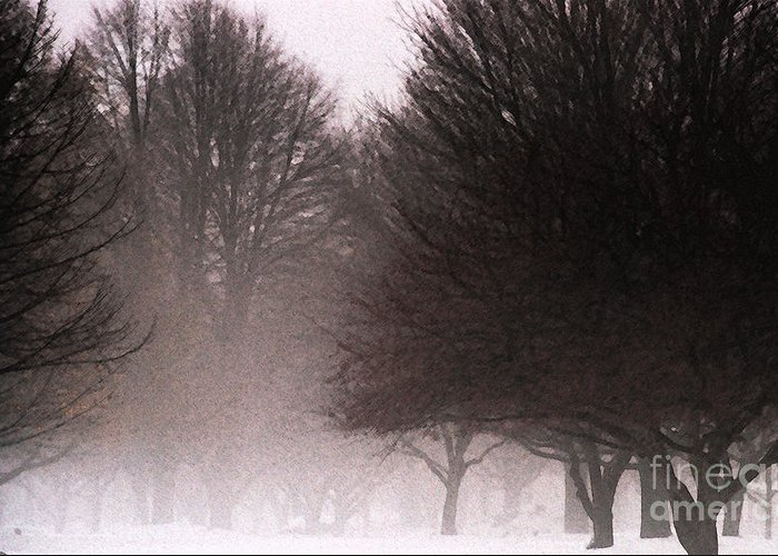 Tree Greeting Card featuring the photograph Misty by Linda Shafer