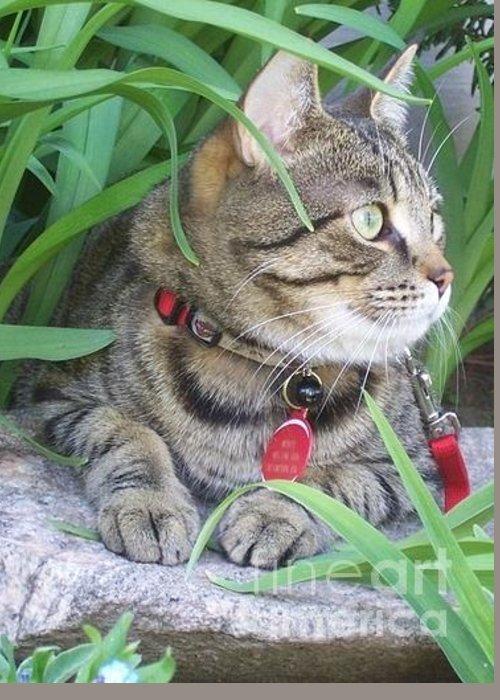 Cat Greeting Card featuring the photograph Monty In The Garden by Jolanta Anna Karolska