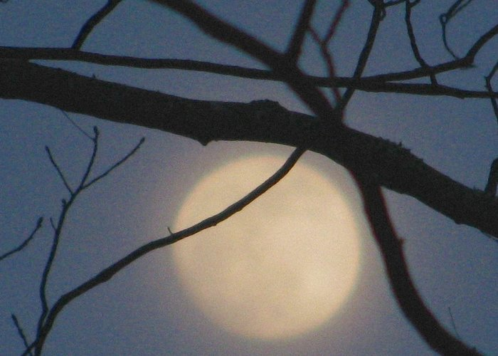 Full Moon Greeting Card featuring the photograph Moon Glow by Lindie Racz