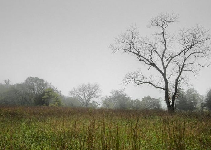 Landscape Greeting Card featuring the photograph Morning Fog by Ryan Heffron