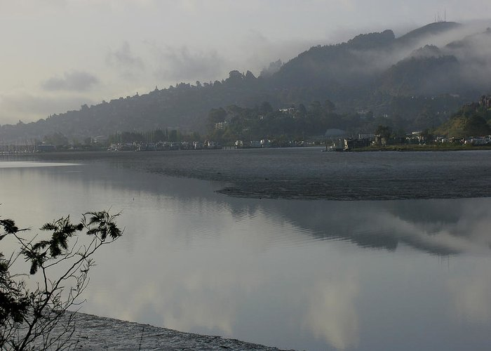 Landscape.west Sausalito.reflection.fog. Greeting Card featuring the photograph Morning Fog by Vari Buendia