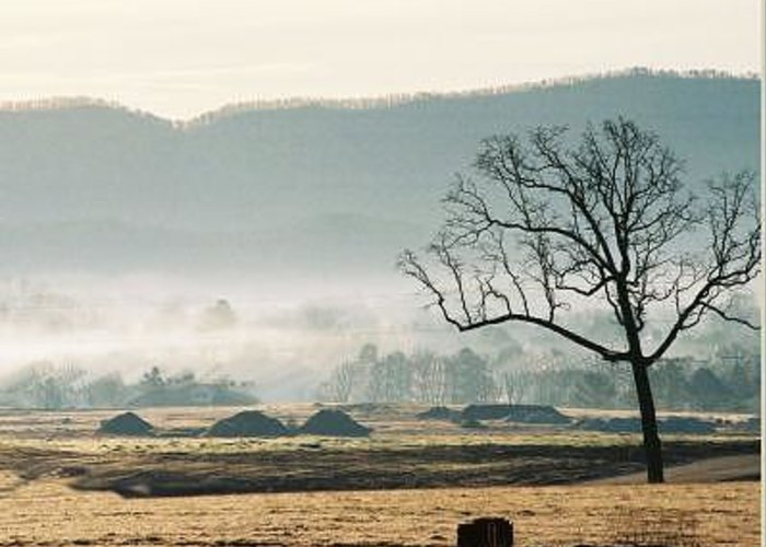 Landscapes Greeting Card featuring the photograph Morning Mist by Linda A Waterhouse