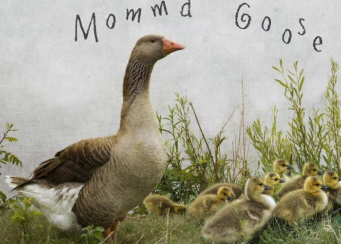 Mother Goose Greeting Card featuring the photograph Mother Goose by Juli Scalzi
