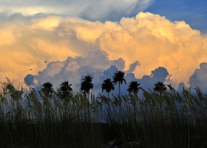 Fine Art Photography Greeting Card featuring the photograph Native Florida by David Lee Thompson
