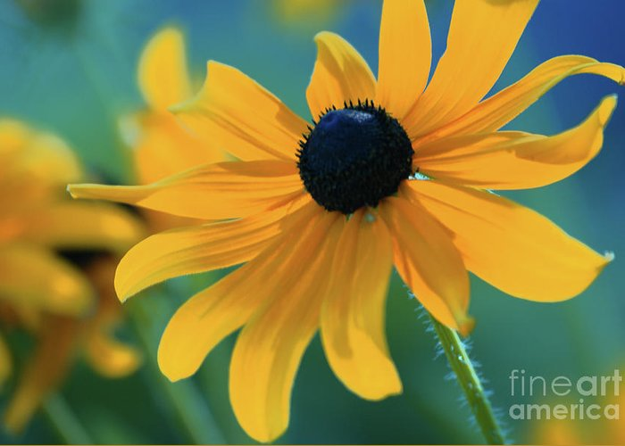 floral Prints Greeting Card featuring the photograph Ocealum 02 by Aimelle