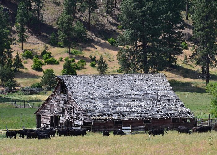 Old Greeting Card featuring the photograph Old Barn by Linda Larson