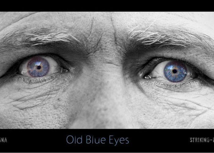 Eyes Greeting Card featuring the photograph Old Blue Eyes Poster Print by James BO Insogna