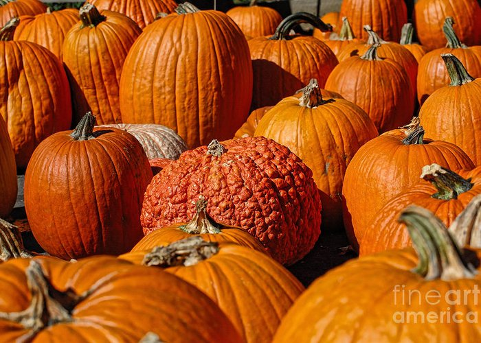Pumpkin Greeting Card featuring the photograph One Of A Kind by Edward Sobuta