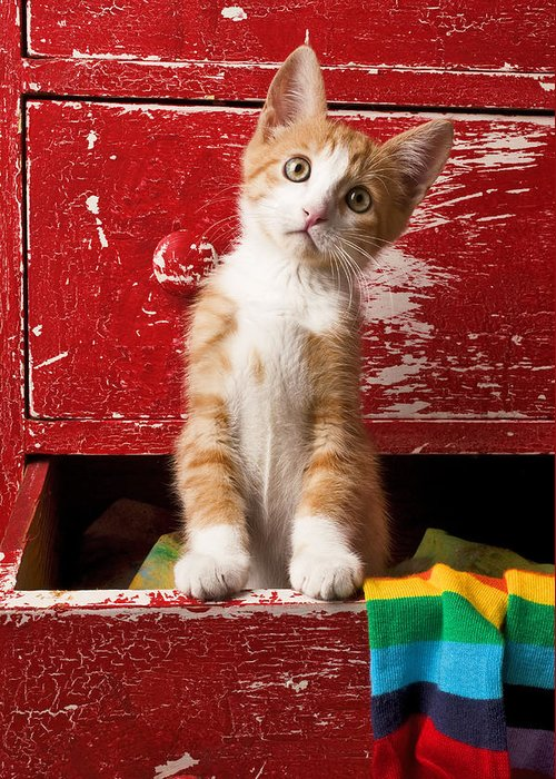 Kitten Greeting Card featuring the photograph Orange Tabby Kitten In Red Drawer by Garry Gay