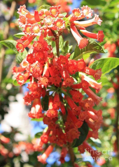 Orange Trumpet Flower Greeting Card featuring the photograph Orange Trumpet Flower by Carol Groenen