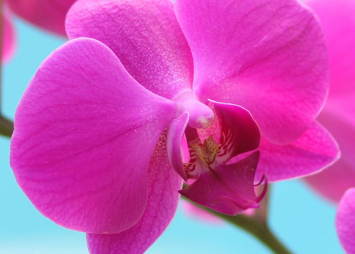 Flower Photographs Greeting Card featuring the photograph Orchid At The Ocean Closeup by Michi Sherwood