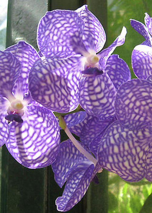 Orchid Greeting Card featuring the photograph Orchid by Darren Stein