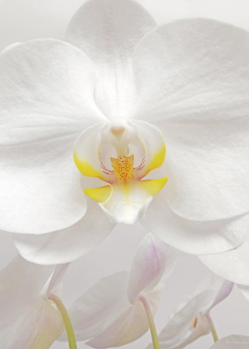 White Greeting Card featuring the photograph Orchid by Wim Lanclus