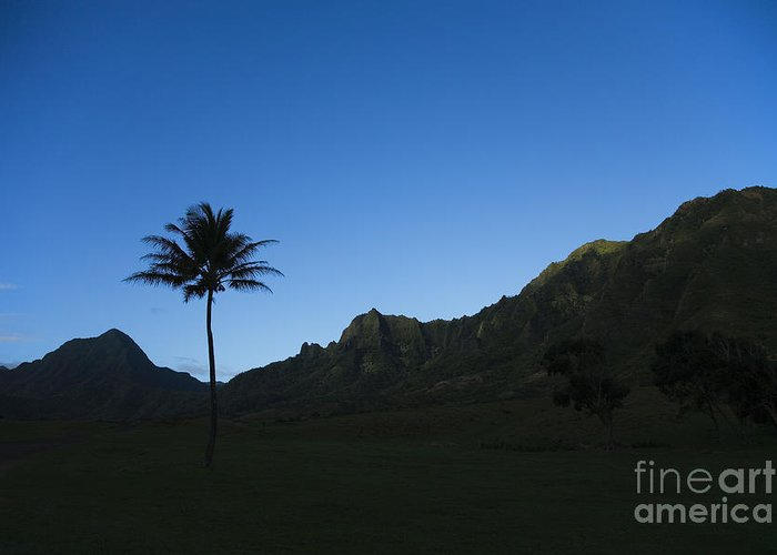 Bright Greeting Card featuring the photograph Palm And Blue Sky by Dana Edmunds - Printscapes