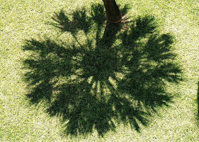 Palm Tree Greeting Card featuring the photograph Palm Shadow by Richard Mansfield