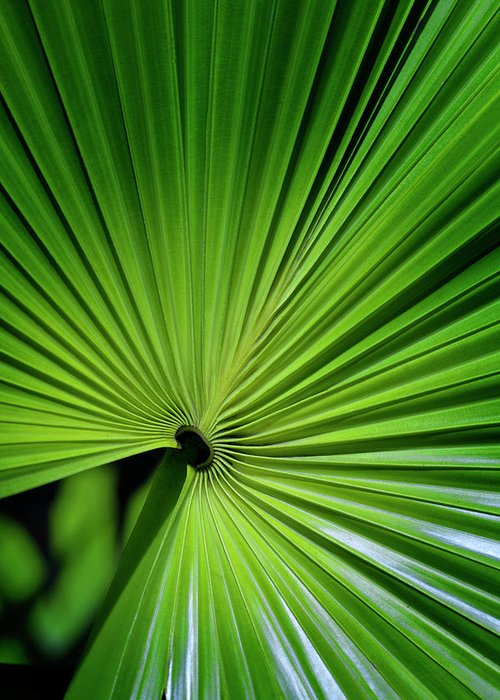 Bosky Greeting Card featuring the photograph Palmgreen by Al Hurley
