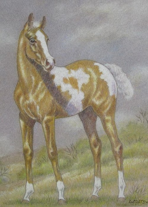 Paint Foal Greeting Card featuring the pastel Palomino Paint Foal by Dorothy Coatsworth