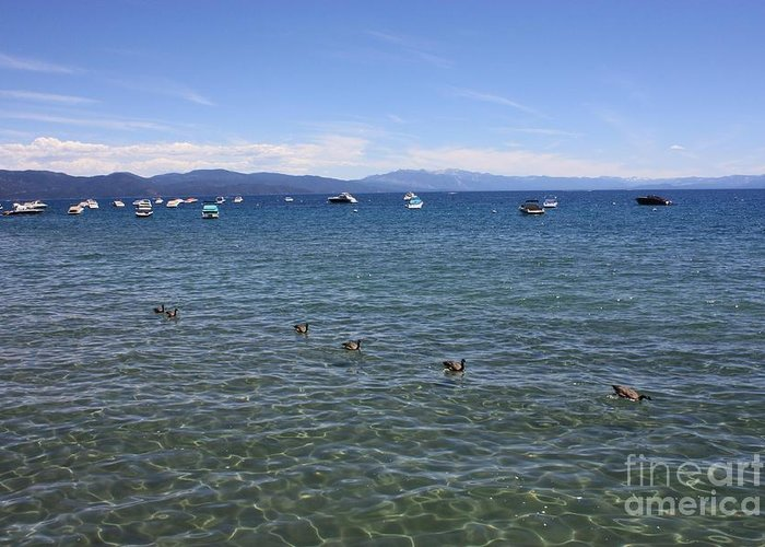 Lake Tahoe Greeting Card featuring the photograph Parade Of Geese by Carol Groenen
