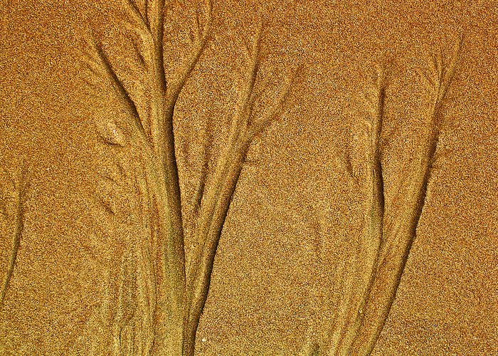 Sand Greeting Card featuring the photograph Patterns In The Sand by Elizabeth Hoskinson