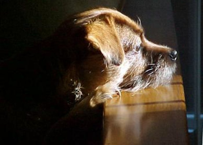Dogs Greeting Card featuring the photograph Pensive Puppy by Linda A Waterhouse