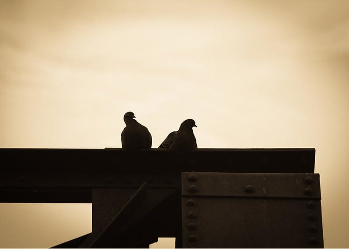 Silhouettes Greeting Card featuring the photograph Pigeon And Steel by Bob Orsillo