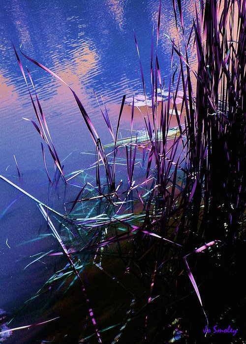 Reeds In Pond At Sunset Greeting Card featuring the photograph Pond Reeds At Sunset by Joanne Smoley