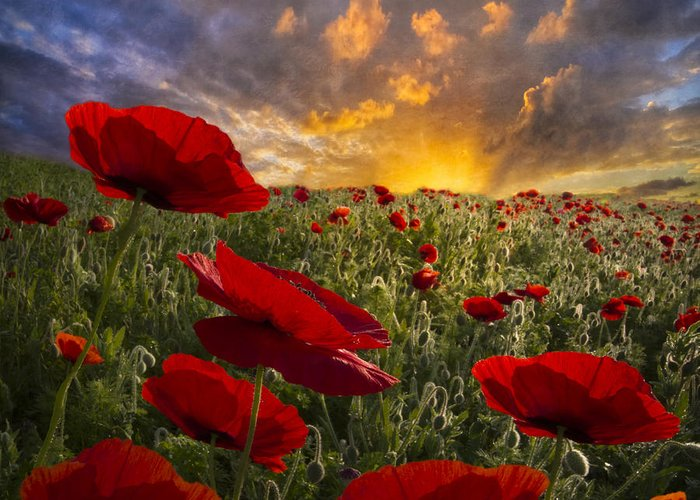 Appalachia Greeting Card featuring the photograph Poppy Field by Debra and Dave Vanderlaan