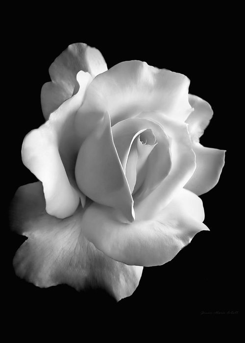 Rose Greeting Card featuring the photograph Porcelain Rose Flower Black And White by Jennie Marie Schell