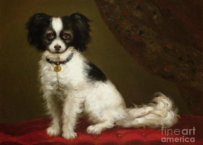 Portrait Of A Spaniel By Anonymous Greeting Card featuring the painting Portrait Of A Spaniel by Anonymous