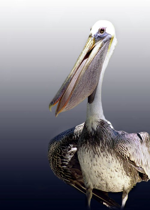 Pelican Greeting Card featuring the photograph Pouches by Skip Willits