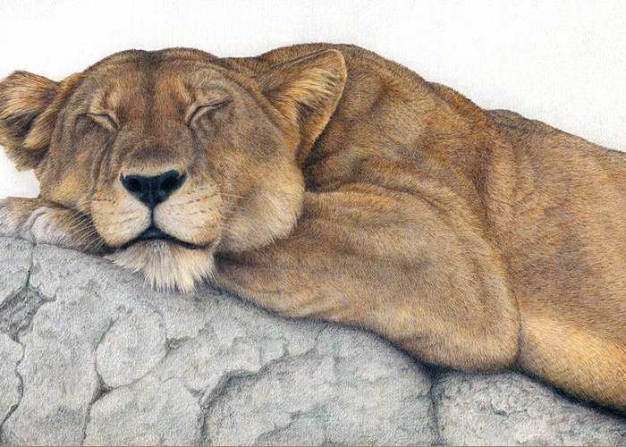 Big Cat Greeting Card featuring the painting Power And Grace At Rest by Pat Erickson