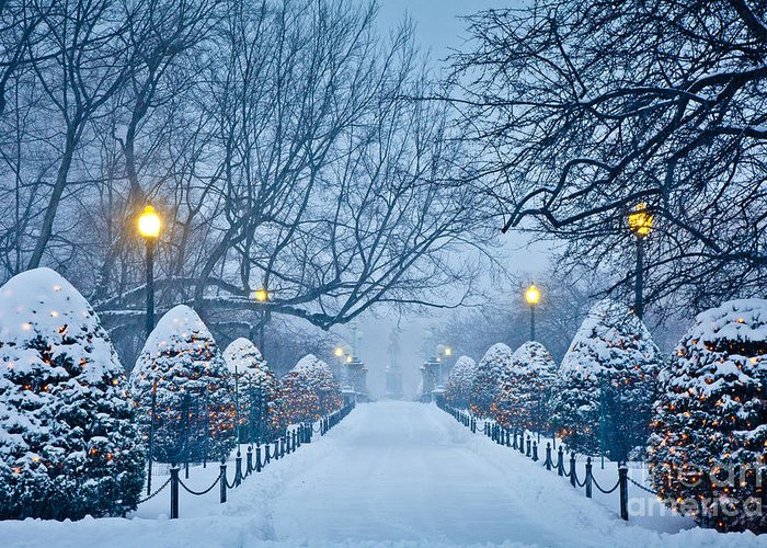 Back Bay Greeting Card featuring the photograph Public Garden Walk by Susan Cole Kelly