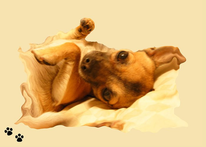 Dogs Greeting Card featuring the photograph Puppy Love by Amanda Vouglas