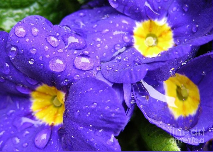 Blue Greeting Card featuring the photograph Raindrops On Blue Flowers by Carol Groenen