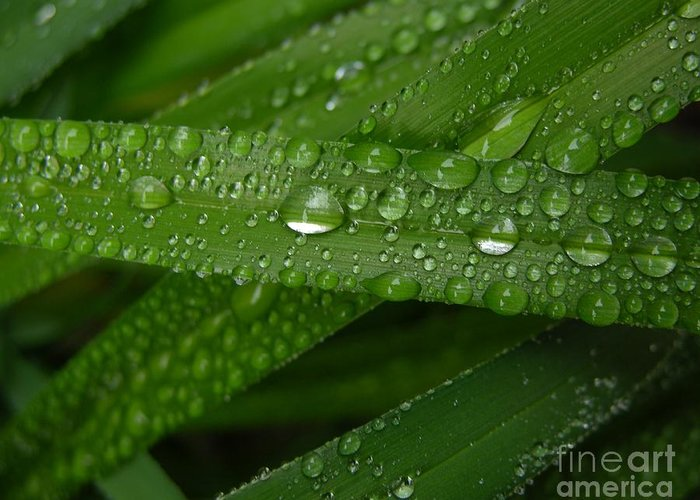 Rain Greeting Card featuring the photograph Raindrops On Green Leaves by Carol Groenen