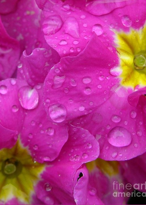 Pink Greeting Card featuring the photograph Raindrops On Pink Flowers by Carol Groenen