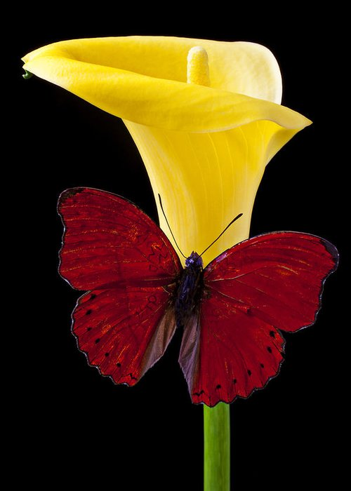 Red Butterfly Greeting Card featuring the photograph Red Butterfly And Calla Lily by Garry Gay