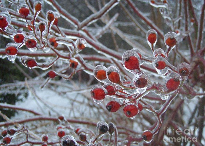 Berries Red Ice Storm Greeting Card featuring the photograph Red Ice Berries by Kristine Nora