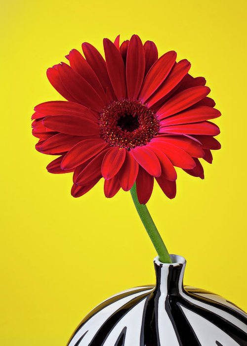 Red Mum Mums Greeting Card featuring the photograph Red Mum Against Yellow Background by Garry Gay