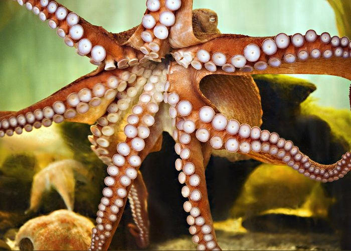 Aquarium Greeting Card featuring the photograph Red Octopus by Marilyn Hunt