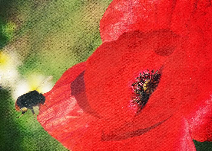 Flower Greeting Card featuring the photograph Red Poppy Impression by Angela Doelling AD DESIGN Photo and PhotoArt