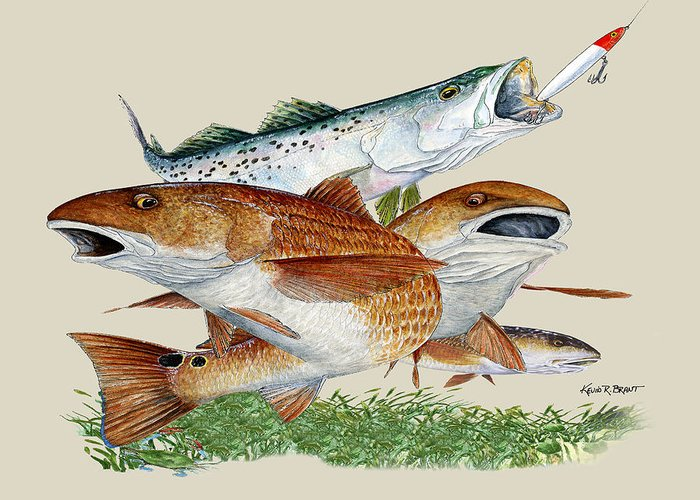 Redfish Greeting Card featuring the painting Reds And Trout by Kevin Brant