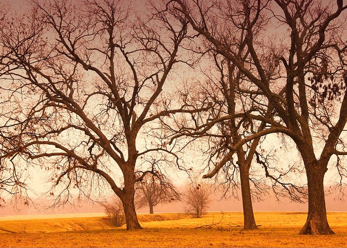 Tree Greeting Card featuring the photograph Revelation by Iris Greenwell