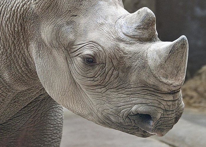 Rhinoceros Greeting Card featuring the photograph Rhinoceros by Tom Mc Nemar