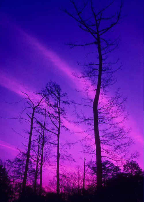 Tree; Winter; Trees; Sky; Clouds; Nature; Night; Evening; Silhouette Greeting Card featuring the photograph Rosy Fingers Of Dawn by Gerard Fritz