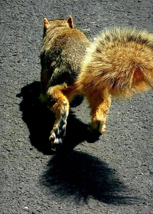Runaway Fox Squirrel Greeting Card featuring the photograph Runaway Fox Squirrel by Beth Akerman