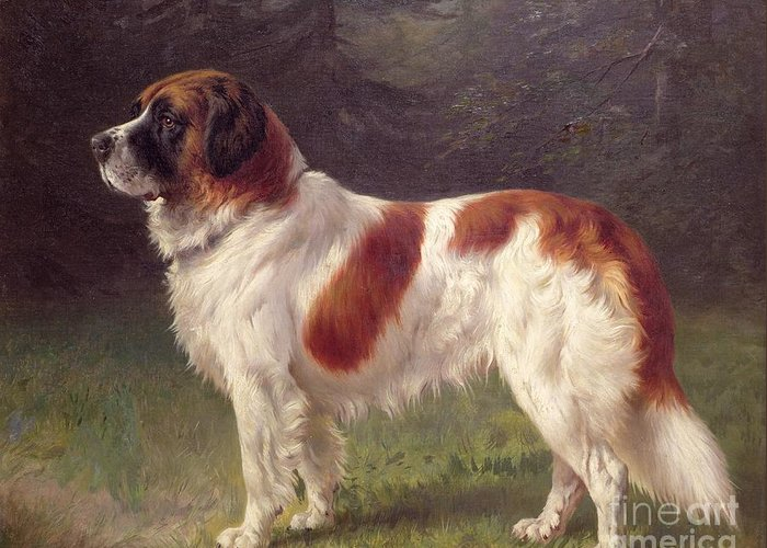 Bernard Greeting Card featuring the painting Saint Bernard by Heinrich Sperling