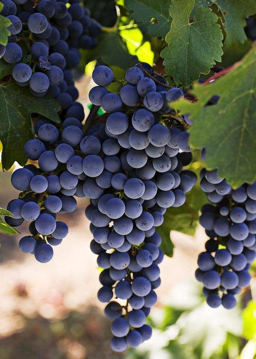 Sauvignon Greeting Card featuring the photograph Sauvignon Grapes by Garry Gay