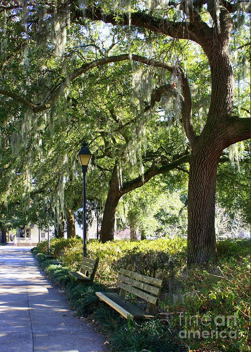 Parks Greeting Card featuring the photograph Savannah Benches by Carol Groenen