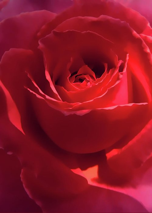 Rose Greeting Card featuring the photograph Scarlet Rose Flower by Jennie Marie Schell